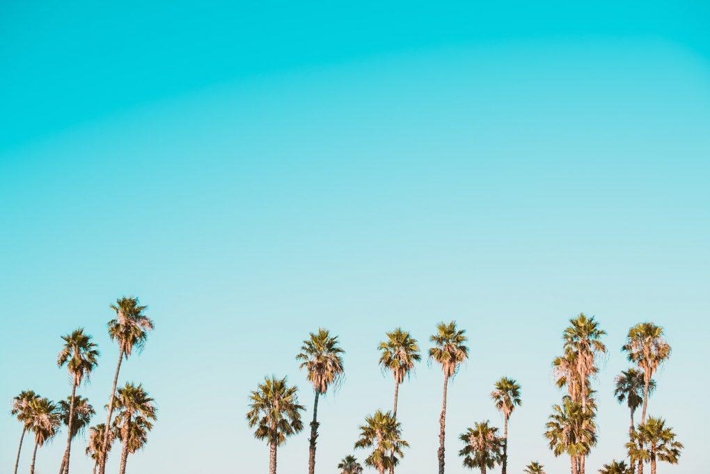 céu azul com grupo de palmeiras
