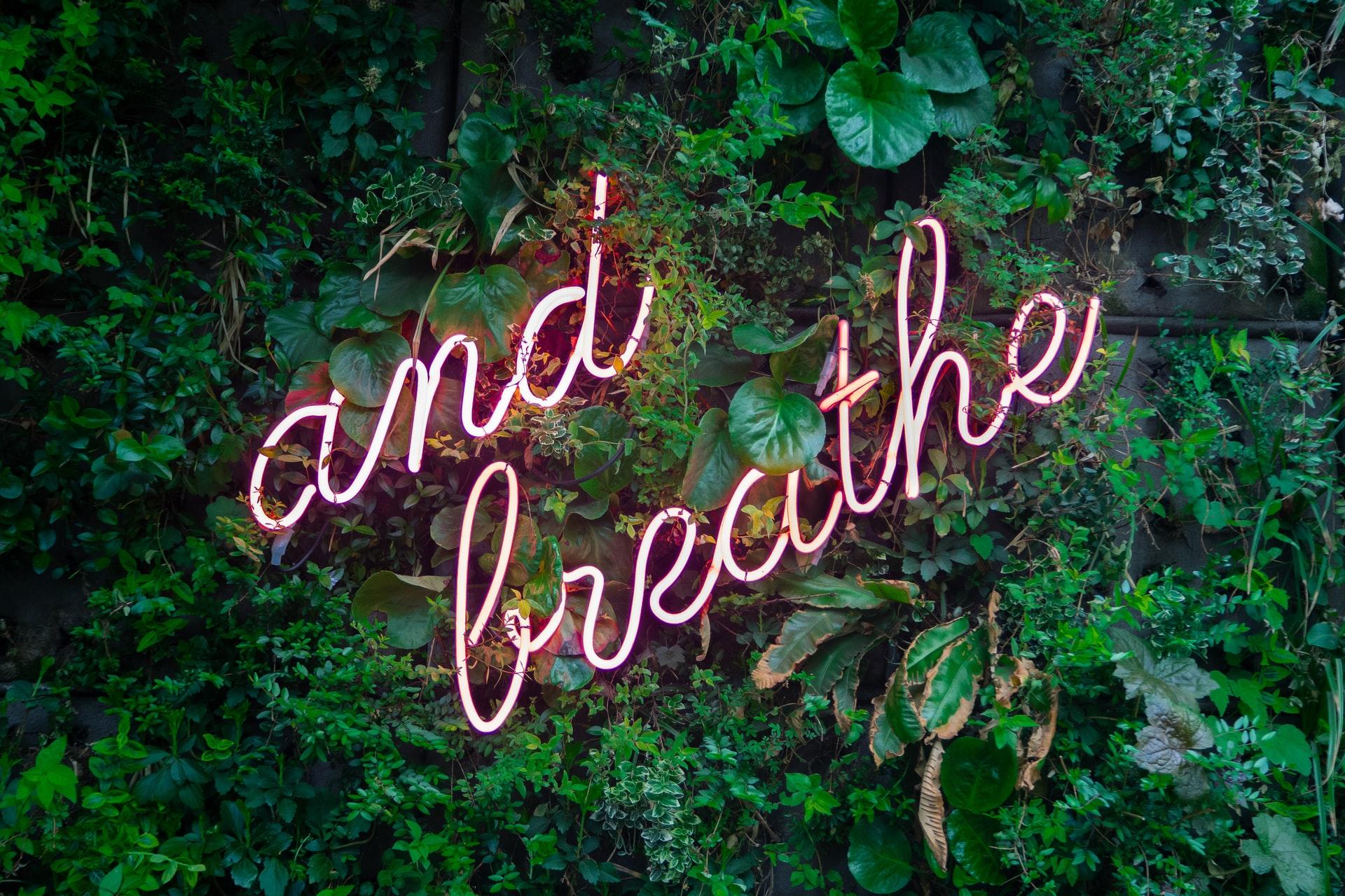 parede com flores a dizer and breath