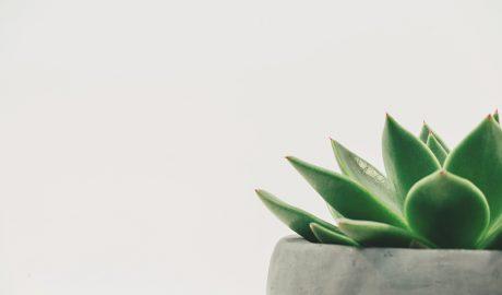 planta verde num vaso