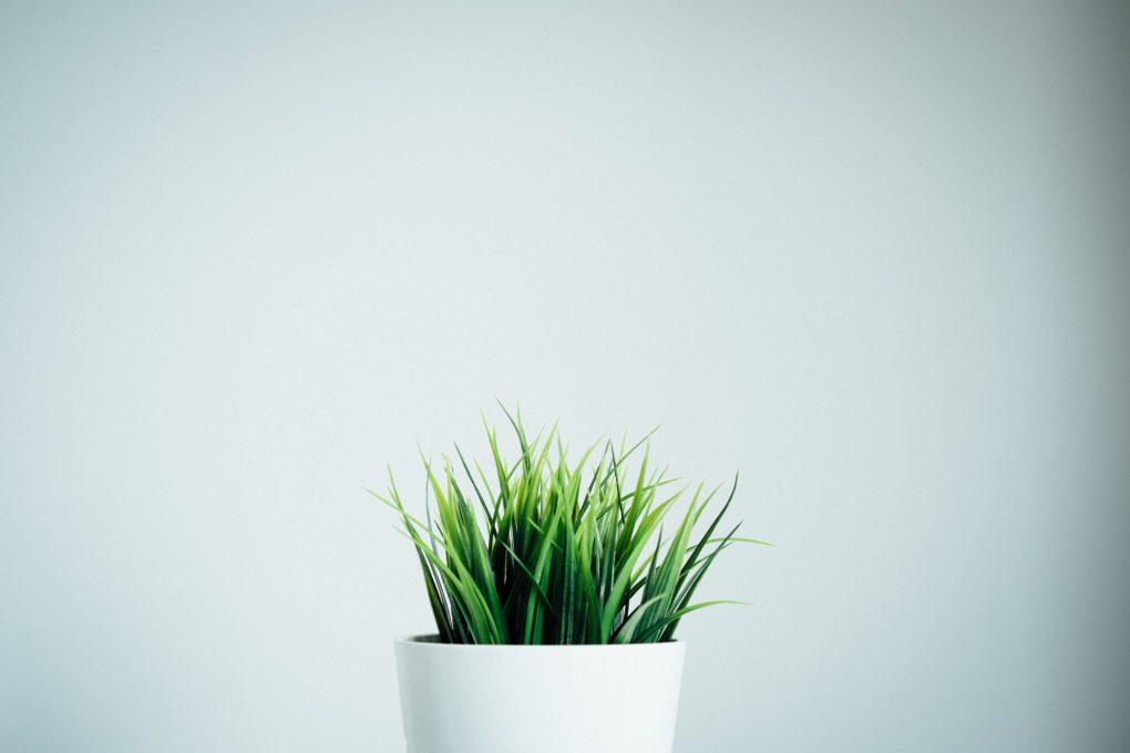 vaso branco com uma planta verde