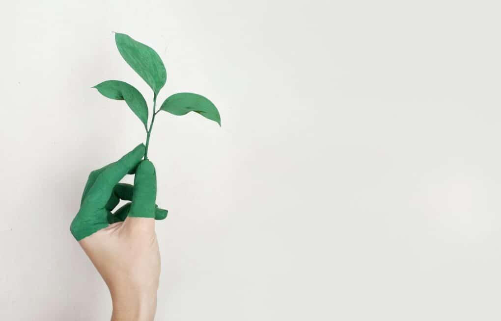 crescimento verde do desenvolvimento pessoal e os problemas do desenvolvimento pessoal